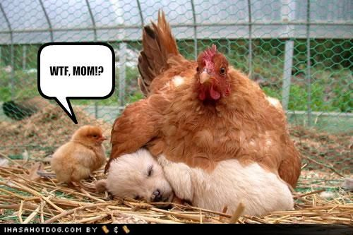 wtf-mom